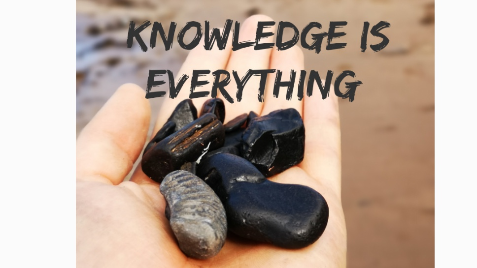 What is Whitby jet made from ?