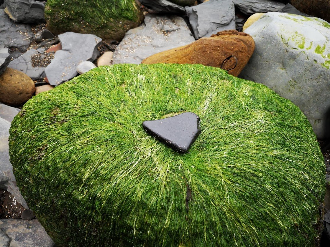 How to find Whitby Jet