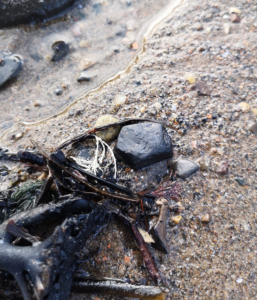 Sea coal washes up on the beaches in the areas where you can find Whitby Jet